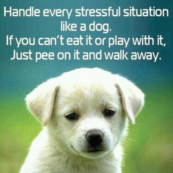 puppy stress relief