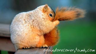 squirrel-ashamed.png